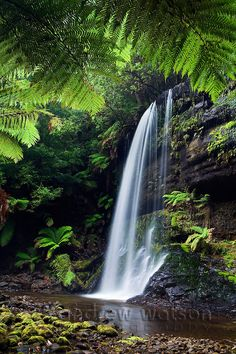 Russell Falls in Mt Field National Park, Tasmania Andrew Watson Photography All Nature, Amazing Nature, Beautiful Waterfalls, Beautiful Landscapes, Tasmania, Places To Travel, Places To See, Places Around The World, Around The Worlds