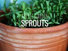 ARCTICdeco.com: Arctic Garden Sprouts; Preparing your garden for the summer.