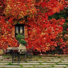 40 Inspiring Fall Patio Decorating Ideas : 40 Cozy Fall Patio Decorating Ideas With Circle Table Chair Window Natural Stone Floor Red Flower. Parasols, Patio Umbrellas, Patio Decorating Ideas On A Budget, Decor Ideas, Outdoor Events, Outdoor Decor, Virginia Creeper, Cozy Patio, Autumn Leaves
