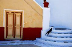 Black sat on white steps, Simi island