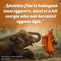 Doreen Virtue, Tarot, Elephant, Animals, Animales, Animaux, Elephants, Animal, Animais