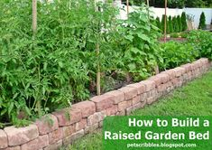 How to Build a Raised Garden Bed   The Shed by Pet Scribbles