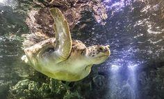Turtle - Lulu