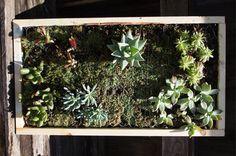 Home-Dzine - Make a vertical garden