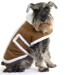 Abrigos para perros - Blog de mascotas de PerrosGatosymas.es