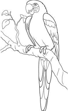 Parrot Coloring Pages For Kids from Animals Coloring Pages category. Find out more nice coloring pages for your child Art Drawings For Kids, Pencil Art Drawings, Bird Drawings, Easy Drawings, Animal Drawings, Drawing Sketches, Drawing Ideas, Bird Coloring Pages, Coloring Pages For Kids