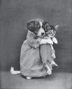dressed up old fashioned dog and cat