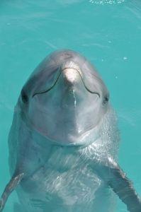 Happy dolphin..adorable!