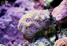 Коралловые рифы в макрофотографиях Феликса Саласара
