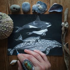 Cold Water Swimmers Pen, ink, graphite  Orca, Beluga, Narwhale, Grey Whale Swimming in moonlight Art