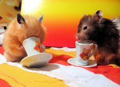 Does the hamster have his face stuck in the cup, or is he just drinking the tea?