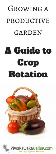 Crop rotation is a simple concept often made difficult. With a good permaculture crop rotation system you will develop a productive garden.