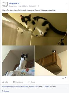 Post with 3487 votes and 5128 views. Tagged with , ; Every bath you take, every snack you bake, every move you make, I'll be watching you Cat Watch, Here Kitty Kitty, You Take, Cool Cats, Best Funny Pictures, Funny Cats, Life Is Good, Dog Cat, Bath