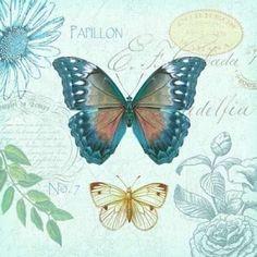 Butterflies and Botanical 1 Canvas Art - Christopher James (24 x 24)