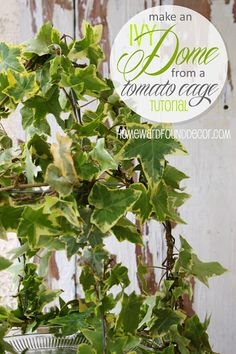 HOMEWARDfound Decor: Tutorial: Ivy Dome from a Wire Tomato Cage