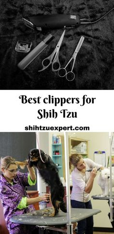 12 Best Dog Clippers for Shih Tzu 2020 [Fun & Easy Grooming] Dog Grooming Clippers, Dog Grooming Tips, Baby Shih Tzu, Shih Tzu Puppy, Shih Tzus, Dog Separation Anxiety, Group Of Dogs, Dog Safety, Puppy Face