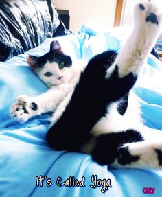 Sammy our ex-feral cat doing a bit of morning yoga lol