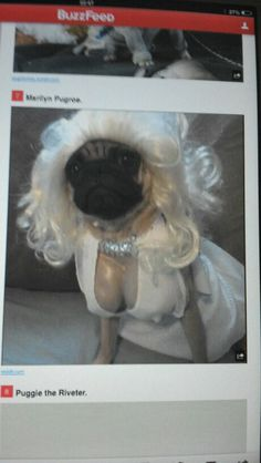 Marilyn Pug OMG this is just wrong