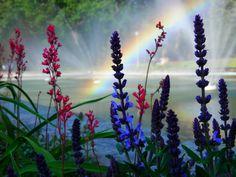 #flowers #rainbow