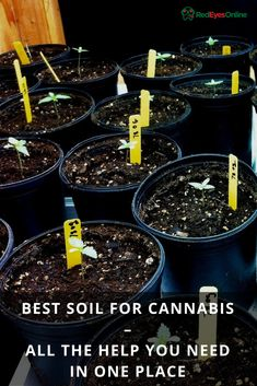 Your global source for the latest marijuana news in Along with the Best CBD products, and a up to date watch on weed legalization. Growing Weed, Growing Plants, Cannabis Cultivation, Weed Seeds, Marijuana Plants, The Help, Medical Marijuana, Plants, Kitchens