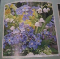Spring. Flowers. Garden Ideas