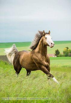 "scarlettjane22: ""Trigger Horses'Art ~ Elsa Meier - Photographies Equestres. with Corinne Eisele. """