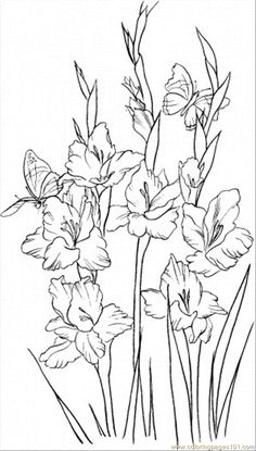 Gladiolus 2 coloring page - Free Printable Coloring Pages