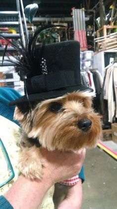 Cal Shakes mascot Anastasia tries on some of the costume shop's latest designs.