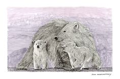 Pen & ink drawing of momma Polar Bear with two cubs by Jack Pumphrey, the polar bear is classified as a vulnerable species, and at least three of the nineteen polar bear subpopulations are currently in decline, for decades, large-scale hunting raised international concern for the future of the species, but populations rebounded after controls and quotas began to take effect, for thousands of years, the polar bear has been a key figure in the material, spiritual, and cultural life of…