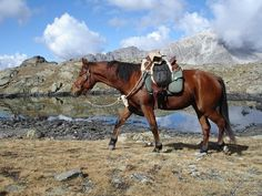 Wanderreiten in der Schweiz