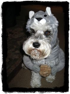 #dog costumes @joyfulscribblings