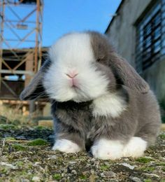 Cute Baby Bunnies, Baby Animals Super Cute, Cute Baby Dogs, Cute Dogs And Puppies, Cute Little Animals, Cute Funny Animals, Baby Farm Animals, Cute Bunny Pictures, Baby Animals Pictures