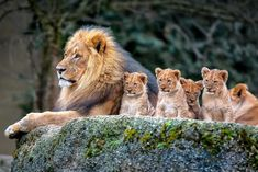 The family of Power