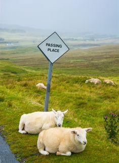 Relaxing in Scotland!