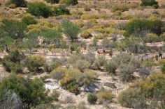 Cederberg Nature Reserve, South Africa, Westerns, Cape, River, Mountains, Outdoor, Beautiful, Mantle