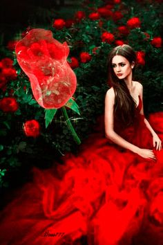 Fashion,Beauty,Landscape,Home Designe,Sexy Girls. Rose Images, Images Gif, Bing Images, Gifs Amor, Glitter Gif, Cool Animations, Fantasy Girl, Shades Of Red, Beautiful Roses