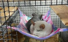 Steel Flying Saucer Chinchilla Exercise Wheels
