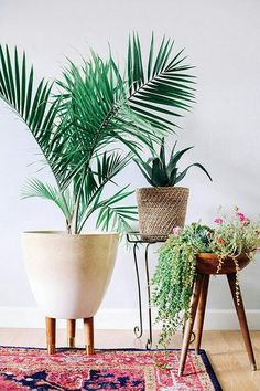 indoor plants and beautiful, mid-century inspired planters #homedecorhipster