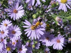 Kansas Native Plants: Landscaping with native wildflowers, grasses, trees, and shrubs of Kansas