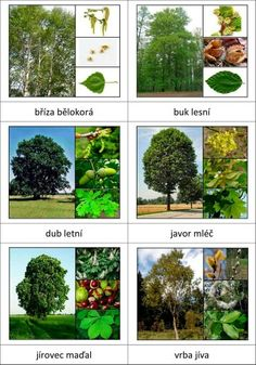 Druhy stromů Preschool Science, Science For Kids, Science And Nature, Forest School Activities, Autumn Activities For Kids, Glenn Doman, Tree Identification, Montessori Materials, Learning Environments