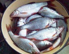 Плотвичка – рыбка нежная
