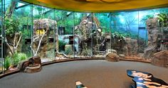 The Los Angeles Zoo and Botanical Gardens has a new exhibit where you can have a warm experience among cold blooded animals. The LAIR - Living Amphibians, Invertebrates, and Reptiles - houses the Zoo's dynamic collection in themed areas with hand-painted murals and sound affects.