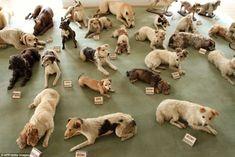 The 51 Preserved Dogs of Castle Bitov, Czech Republic.