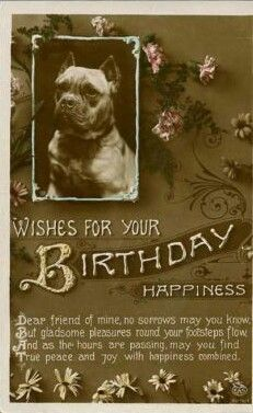 Vintage birthday postcard with a bulldog