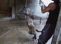 Korean dog meat markets