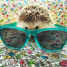 Hedgie with shades!