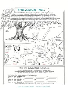 Printables Ecology Worksheets For High School ecology levels of organization worksheet google search decomposers worksheets for kids archbold biological station ecological research conservation