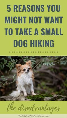 Small dogs can make great camping and hiking companions. Although there are many advantages due to their smaller stature, there are definitely some drawbacks compared to their larger hiking counterparts. Best Small Dogs, Big Dogs, Hiking Dogs, Kinds Of Dogs, Dog Hacks, Free Dogs, Dachshund Dog, Small Dog Breeds, Dog Owners