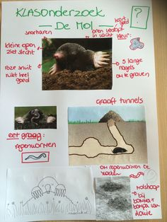 School, Disney, Kids Crafts Diy Easy, Mole, Disney Art