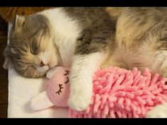 How This Cat Hugs And Snuggles Her Stuffed Bunny Is Too Cute For Words.